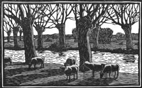 wood-engraving of Sheep by a River